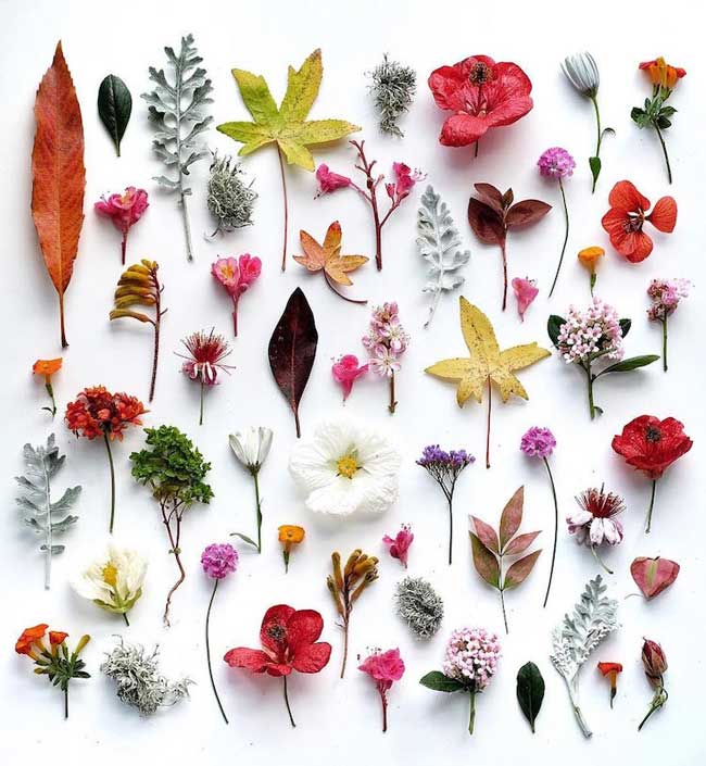 Compositions Fleurs Botaniques Ja Soon Kim
