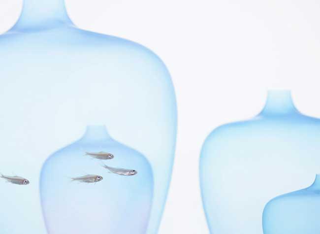 meduse vase nendo jellyfish
