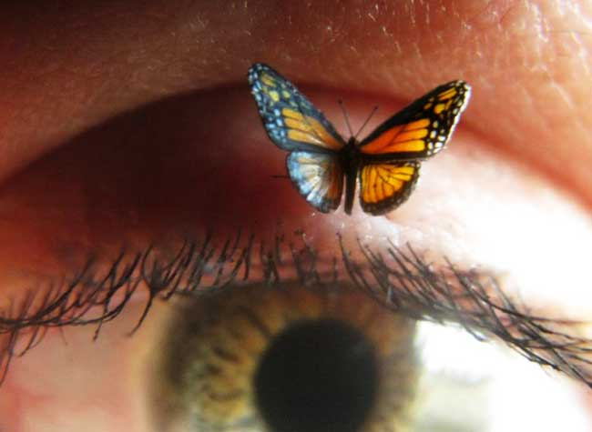 Papillons, Hyper Réalistes Papillons Miniatures Sculptés en Polymère