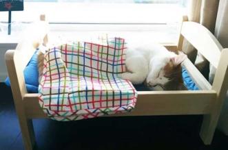 Chat Lit Ikea Refuge