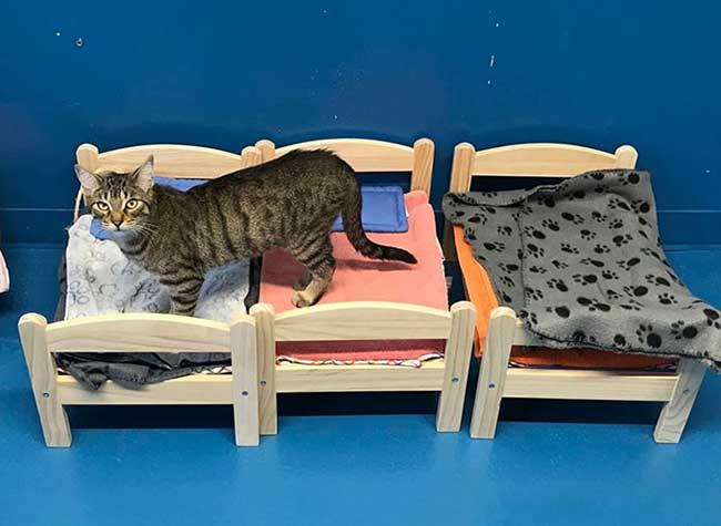 ikea chats lits, Ikea Offre ses Lits de Poupée aux Chats d'un Refuge à Ontario (video)