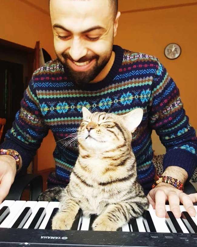 , Ce Pianiste Adopte des Chats Errants qui Deviennent son Auditoire Rêvé (video)