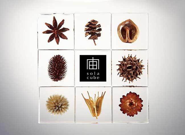 , Les Beautés de la Nature Préservées dans des Cubes Acryliques