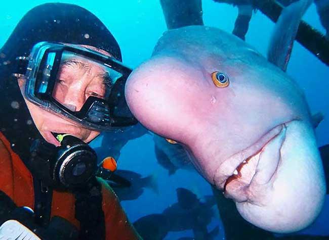 hiroyuki arakawa poisson ami plongeur, Incroyable Depuis 25 Ans ce Plongeur Visite son Ami le Poisson