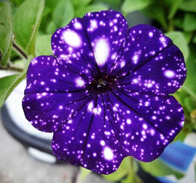 Ces Fleurs Semblent Contenir Tout L Univers Dans Leurs Petales