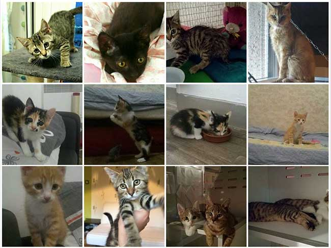 chat poitiers