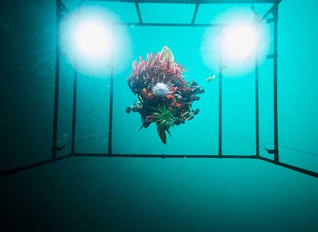 Azuma Makoto Installation Florale Art, Installation d'Art Florale en Eaux Profondes au Large du Japon
