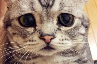 chat triste luhu maggie liu