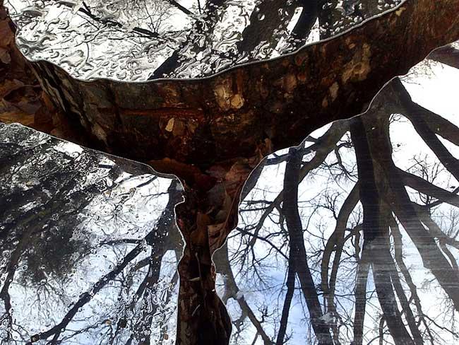 lee borthwick miroir installation art bois 3 - Des Miroirs dans les Bois pour une Installation Artistique