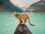 suki chat bengale aventurier