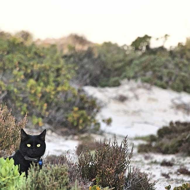chat aventurier australie van richard east, Il Quitte Tout, son Travail, sa Maison et Part Voyager avec le Chat qui l'a Sauvé