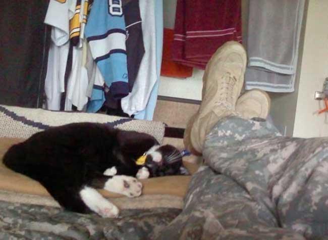chat soldat suicide, Ce Vétéran Allait se Suicider quand il Entendit un Bruit dans les Buissons