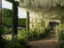 Petworth House Jardins Anglais Photo
