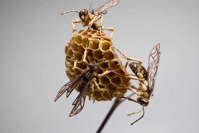 noriyuki saitoh sculptures insectes bambou 3 - Il Sculpte en Bambou d'Etonnants Insectes Grandeur Nature