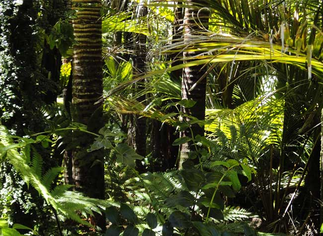 reboisement foret amazonie, 73 Millions d'Arbres Plantés d'ici 2023 pour Sauver l'Amazonie