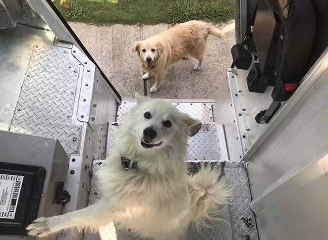 ups dogs chiens livreurs sean mccarren, Les Chiens des Clients UPS attendent Impatiemment les Livreurs