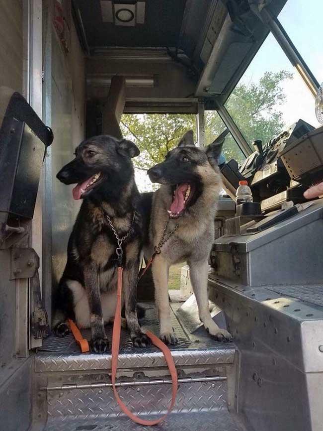 ups dogs chiens livreurs sean mccarren