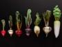 Amanda Dziedzic Sculptures Verre Legumes