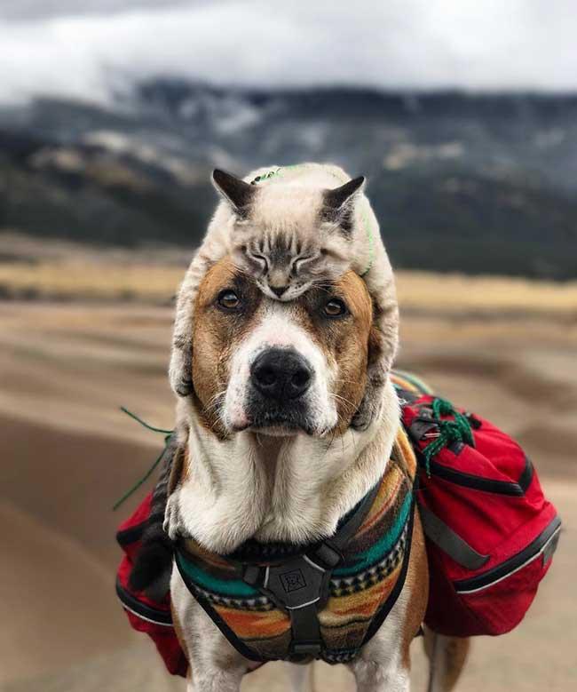 chien chat voyages henry baloo cynthia bennett, Adoptés ce Chat et ce Chien Vivent Désormais une Vie d'Aventuriers