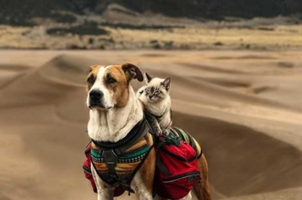 chien chat voyages henry baloo cynthia bennett