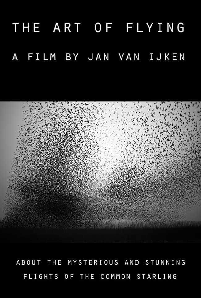 murmuration jan van ijken millier oiseaux essaims, Ballet d'Oiseaux dans une Murmuration à Couper le Souffle (video)