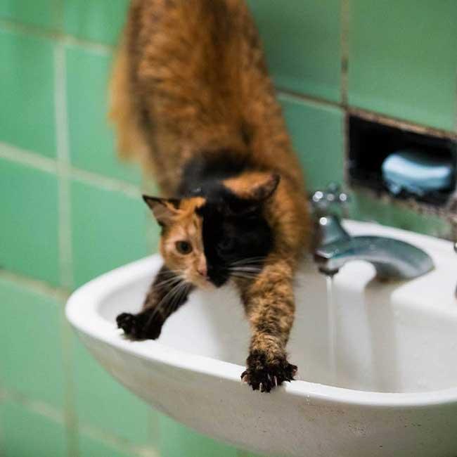 quimera chat chimere instagram, Quimera le Chat aux Deux Visages Parfaitement Symétriques