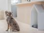 renovation maison chien espace lit