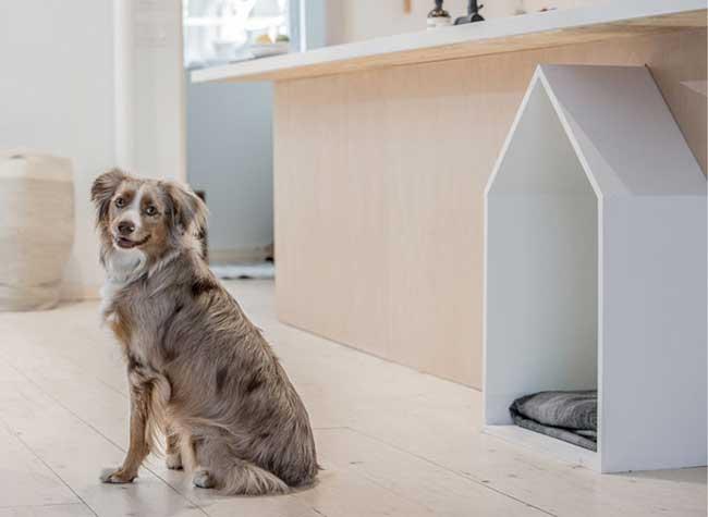 chien de maison astuces et friandises maison pour votre chien with chien de maison stunning. Black Bedroom Furniture Sets. Home Design Ideas