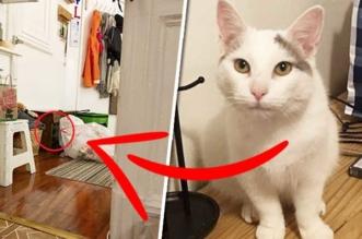 chat pierogi cache grace spelman 0 331x219 - Ce Chat est un Expert en l'Art de se Cacher... Regardez Bien !
