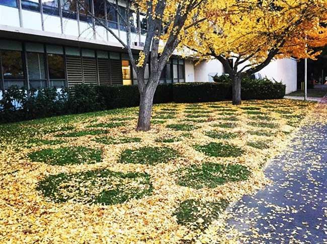 joanna hedrick land art feuilles mortes, Elle a l'Art de Ramasser les Feuilles Mortes à la Pelle