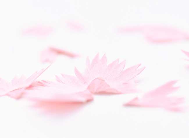 crayons couleur fleurs japon, Adorables Crayons de Couleur et leurs Copeaux en Forme de Fleurs