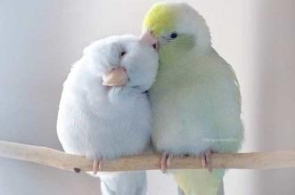 portraits petits perroquets rupa sutton