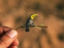 animaux miniatures origami nayan vaishali 8 90x68 - 365 Miniatures d'Animaux de Papier Sculptés en Origami