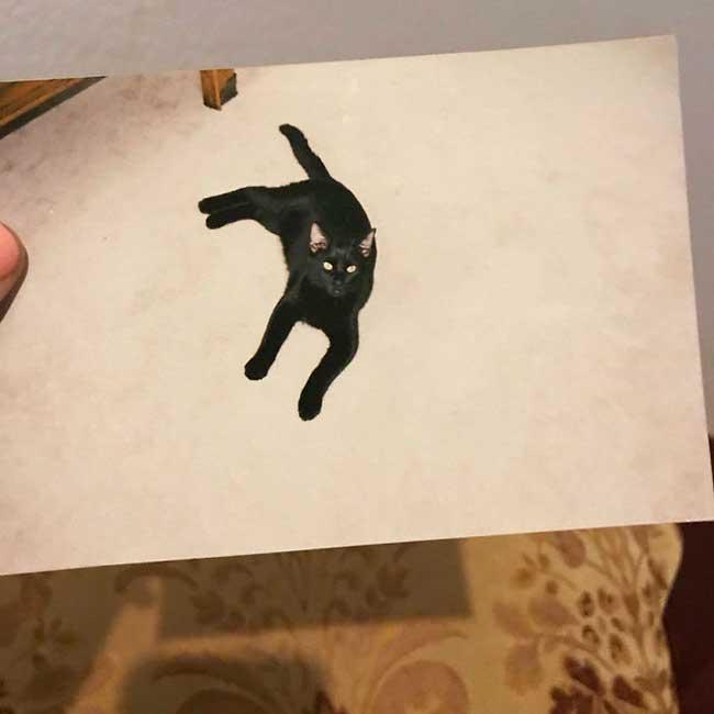 chat noir panther retrouvailles disparition, 5 Ans après ce Chat Retrouve sa Maison dans des Conditions Incroyables