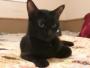 chat noir panther retrouvailles disparition
