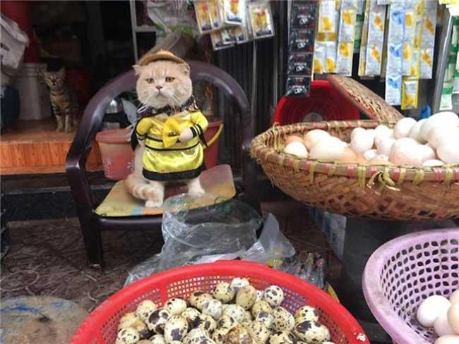 adorable chat vendeur poissons vietnam le quoc phong, Ce Chat Poissonnier Fait Craquer le Monde Entier… Regardez !