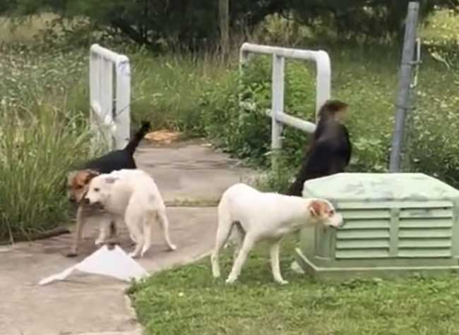 abandon chiens texas femme confrontation, Elle Jette ses 4 Chiens et Affronte les Conséquences de son Acte