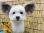 goma petit chien oreilles mickey