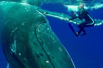 baleine bosse sauvetage plongeuse nan Hauser