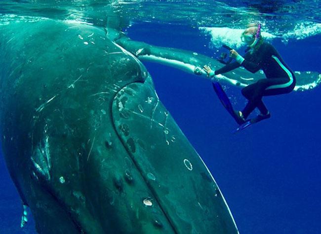 russe attaque requin