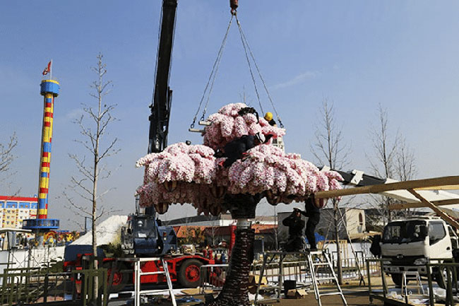 lego arbre cerisier fleurs legoland japon 3 - 800000 Lego pour ce Cerisier en Fleurs Créé par Legoland Japan