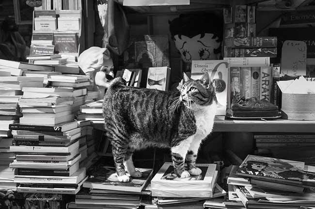 photos-cat-work-chats-marianna-zampieri, Portraits de Chats en Milieu Professionnel par Marianna Zampieri