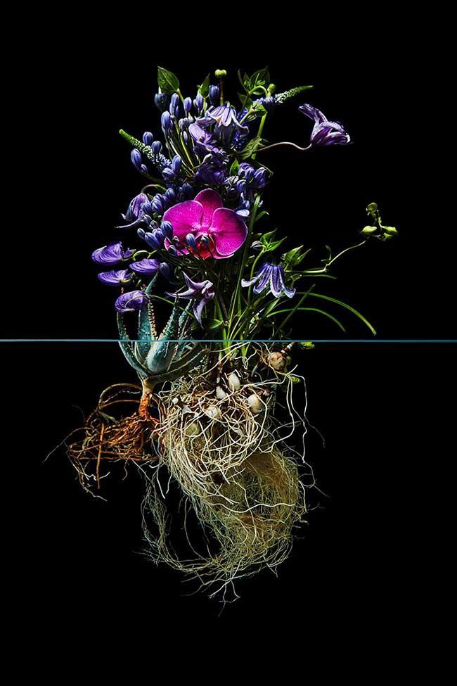 undersurface flowers fleurs racines photos azuma makoto 1 - La Beauté des Fleurs et de leurs Racines Capturée par Azuma Makoto