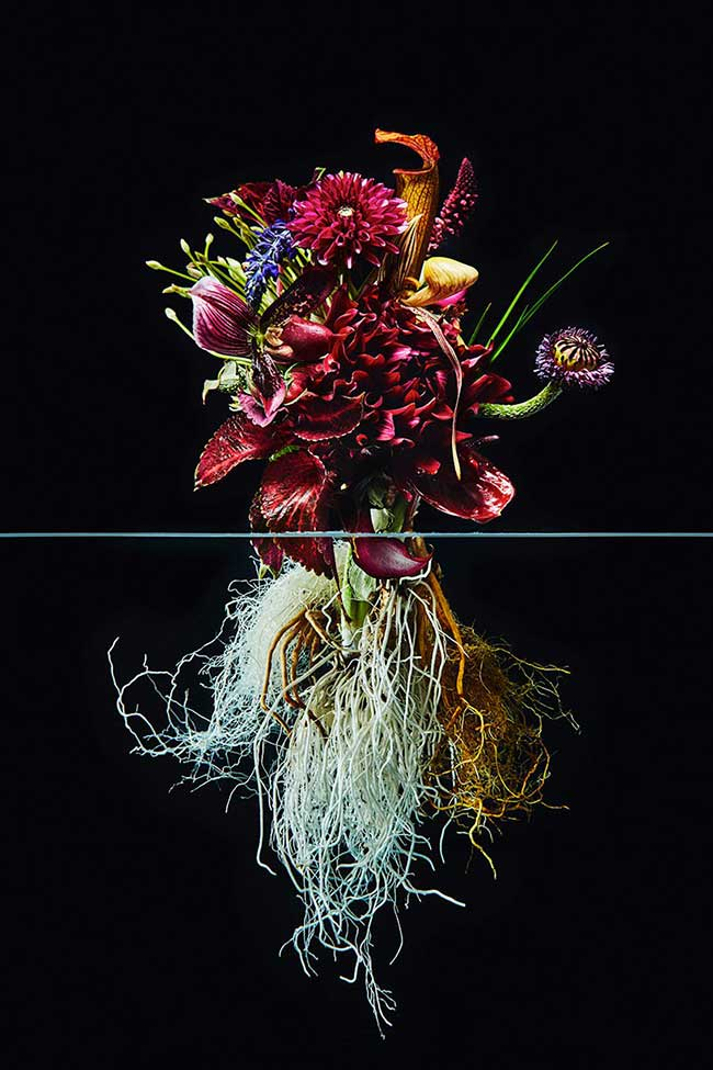 undersurface flowers fleurs racines photos azuma makoto 2 - La Beauté des Fleurs et de leurs Racines Capturée par Azuma Makoto