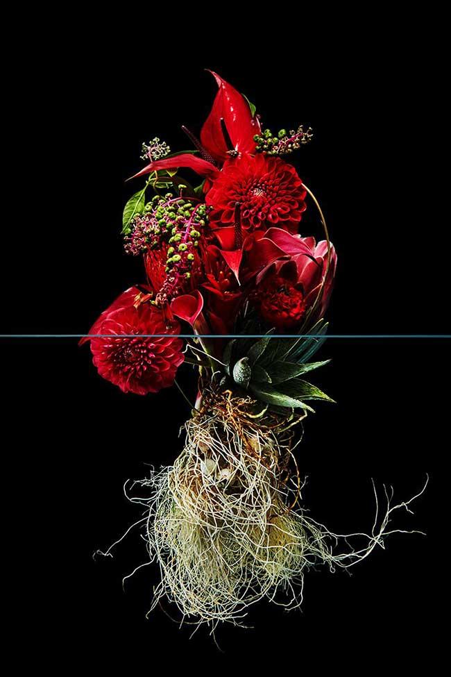 undersurface flowers fleurs racines photos azuma makoto 3 - La Beauté des Fleurs et de leurs Racines Capturée par Azuma Makoto