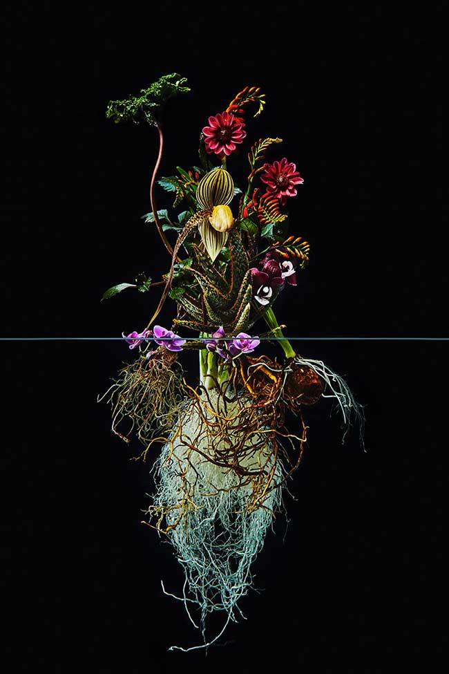 undersurface flowers fleurs racines photos azuma makoto 4 - La Beauté des Fleurs et de leurs Racines Capturée par Azuma Makoto