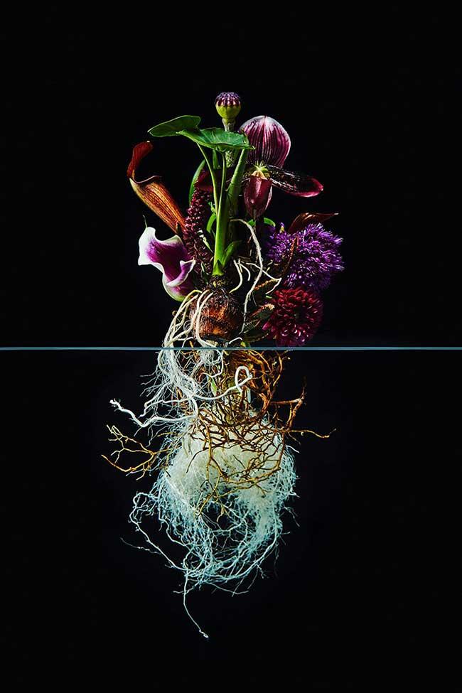 undersurface-flowers fleurs art-azuma-makoto, La Beauté des Fleurs et de leurs Racines Capturée par Azuma Makoto