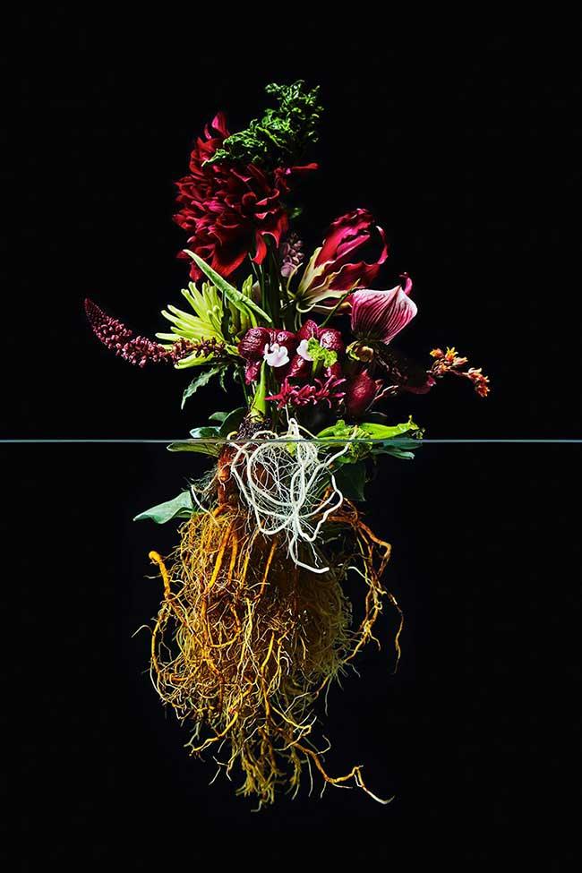 undersurface flowers fleurs racines photos azuma makoto 6 - La Beauté des Fleurs et de leurs Racines Capturée par Azuma Makoto