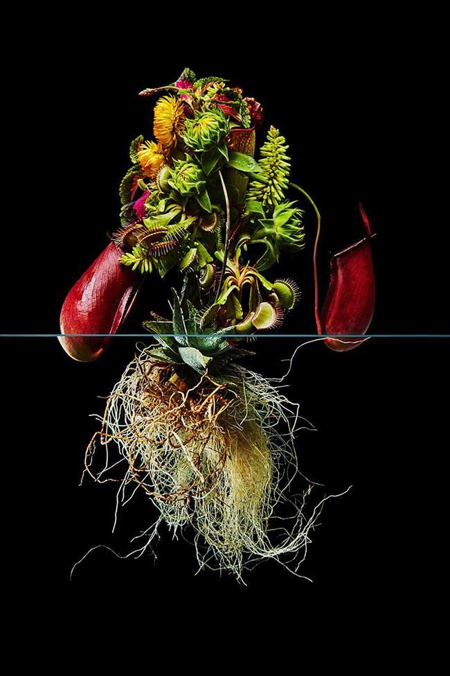 undersurface flowers fleurs racines photos azuma makoto 7 - La Beauté des Fleurs et de leurs Racines Capturée par Azuma Makoto