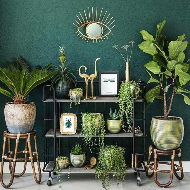 plantes vert deco maison everydeco, Les Plantes, la Touche Verte Déco dans vos Intérieurs